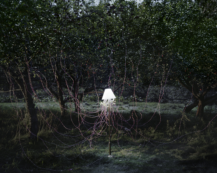 """Caleb Charland, """"Apple Trees and LEDs,"""" 2011"""