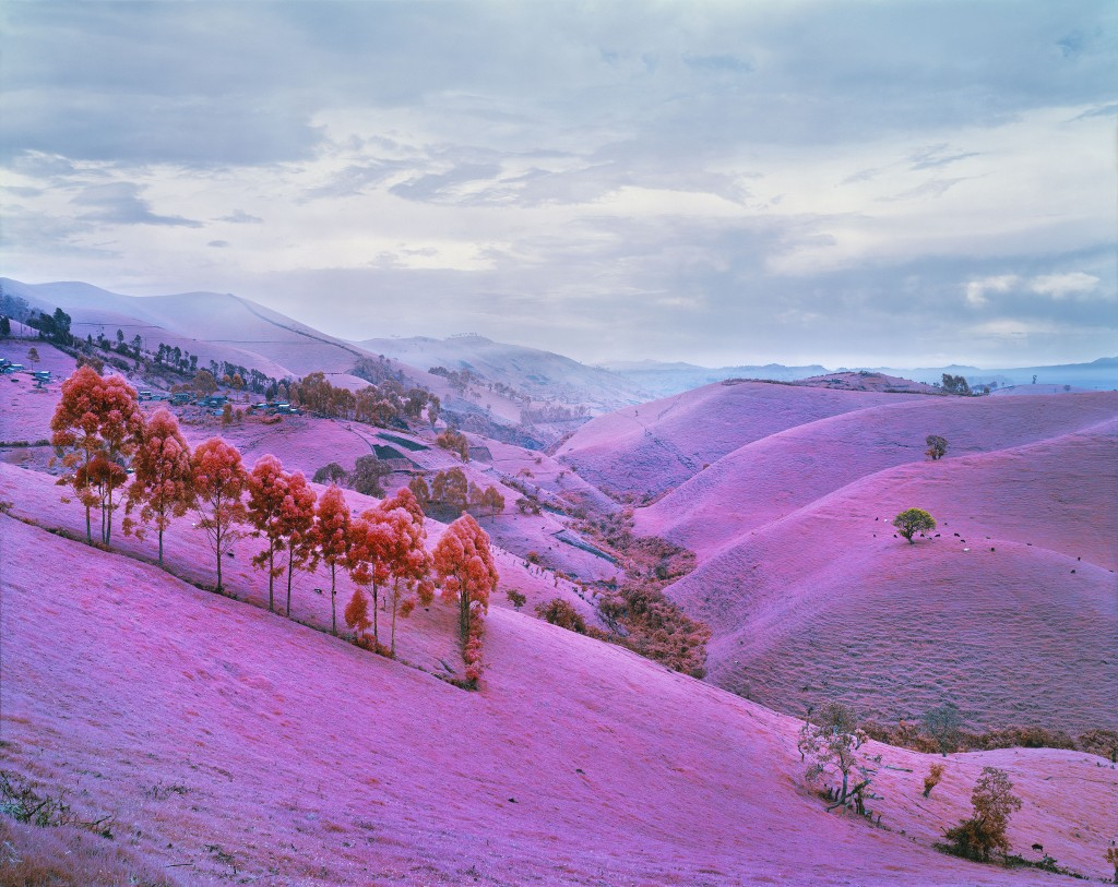 "Richard Mosse. ""Sugar Ray,"" chromogenic development print, 2012"