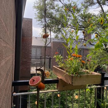 Celebrating Abundance: Bird Show Nourishes the Local Ecosystem
